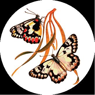 Sa Butterflies And Moths
